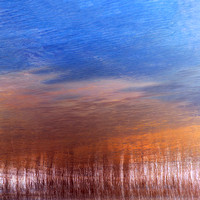Moving Reeds in the Water Gleam