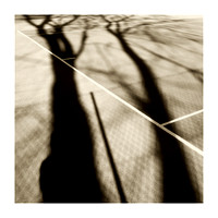 Tree Shadow on the Tennis Courts