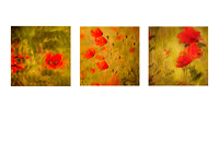 Triptych - Poppies amongst the Marigolds