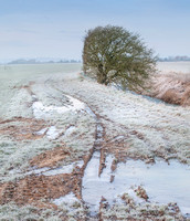Romney Marsh, Kent, Winter,Ice,Frost,Tree, Fine Art